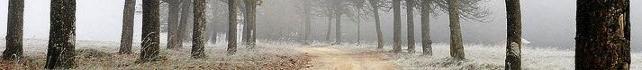Bäume im Nebel an einer Straße